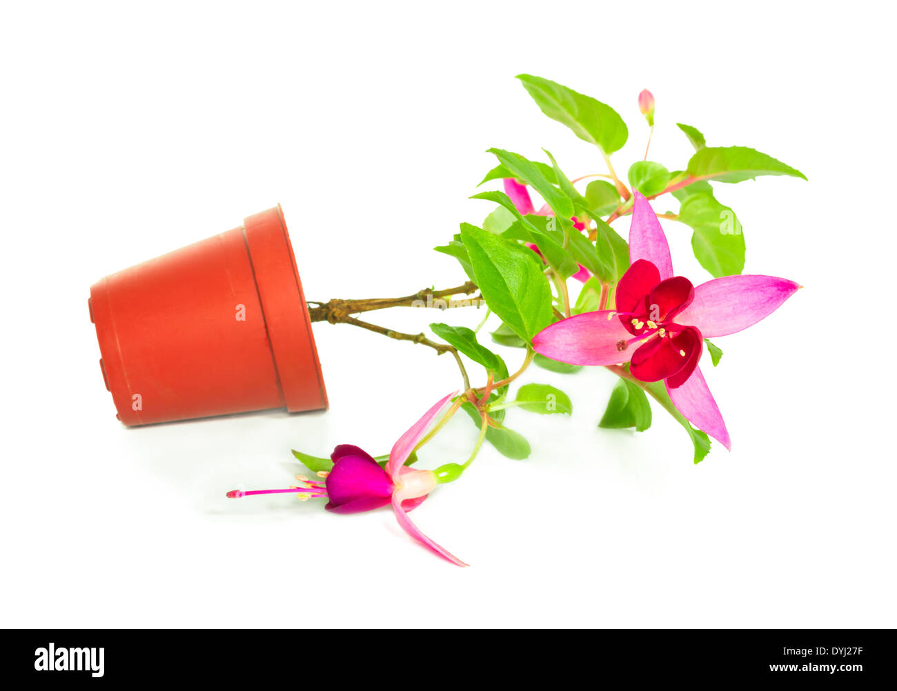 Houseplants Cut Out Stock Images Pictures Page 2 Alamy