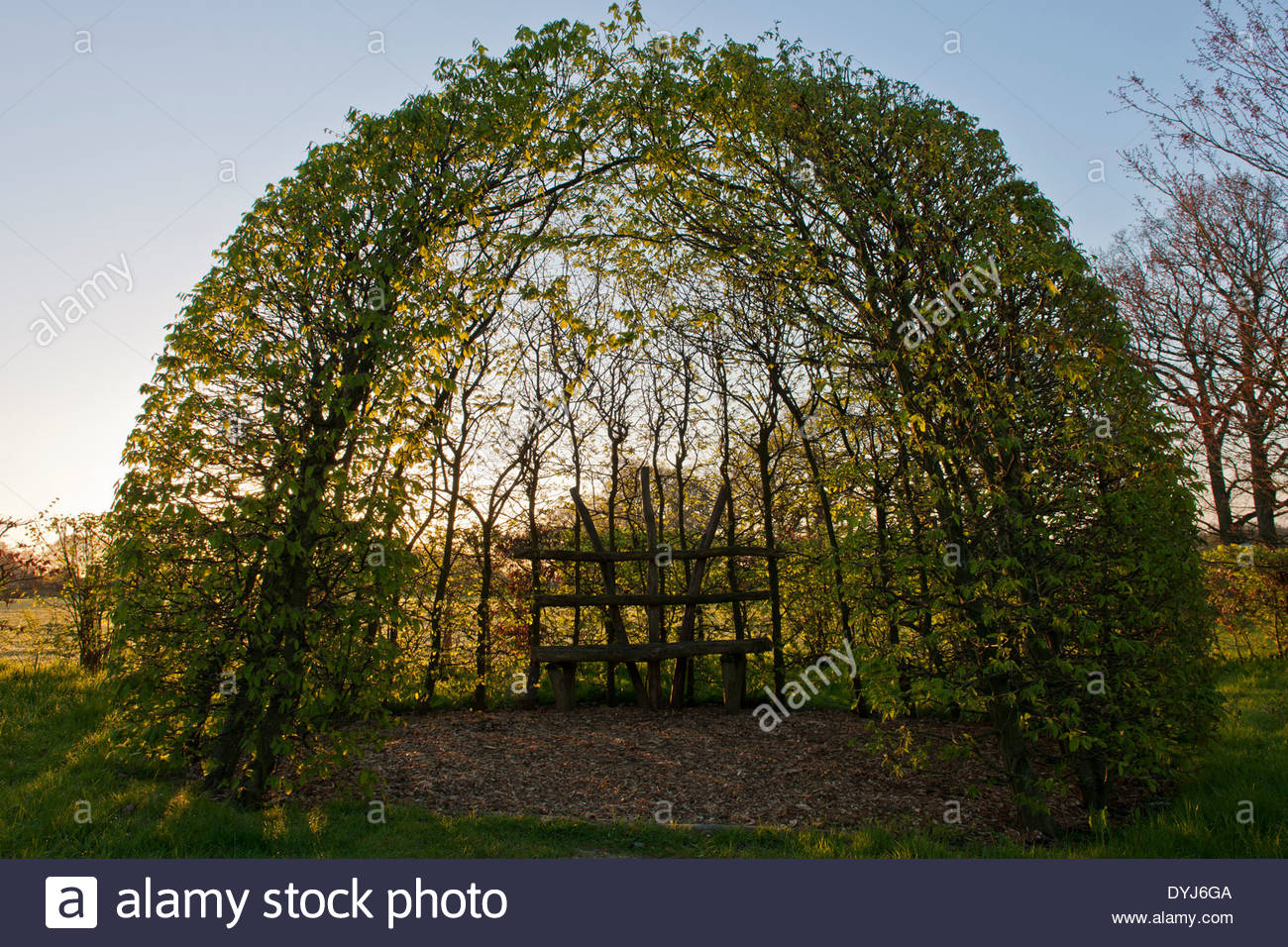 Sculptural Covered Garden Seat Beanch Trained Pruned Like Trees Tilia  Circular Dome Sun Sunny Blue Sky Spring April Merriments