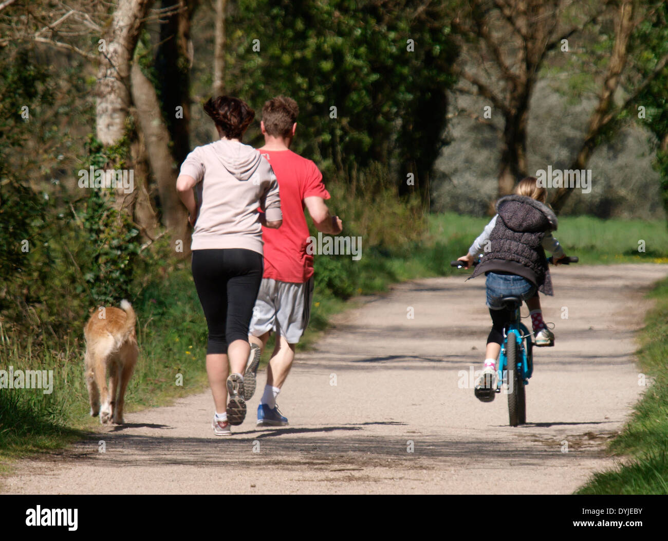 Family keeping fit together on the Camel trail between Wadebridge and Bodmin, Cornwall, UK - Stock Image