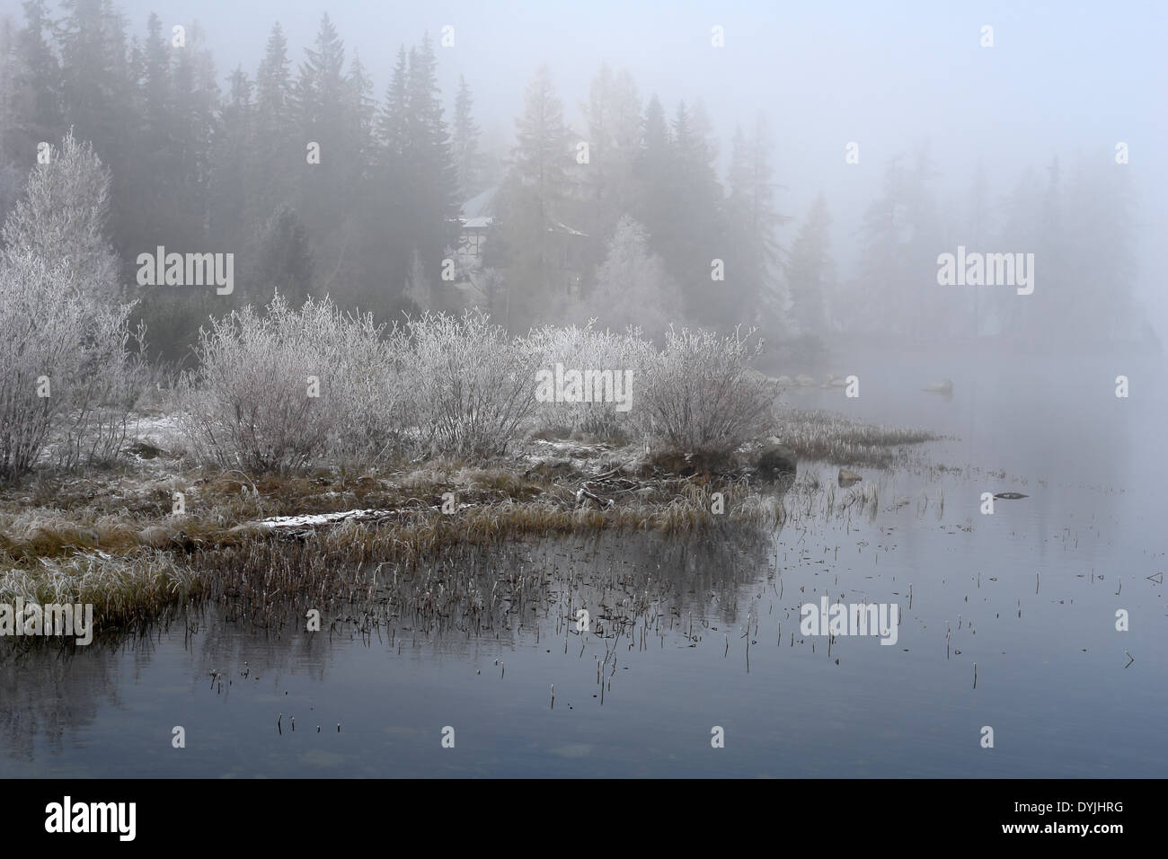 Lanscape with trees,waters and fogs on the Strbske Pleso,Slovakia - Stock Image