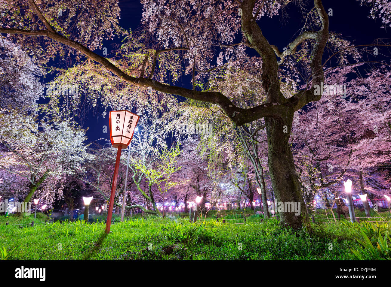 """Kyoto, Japan at Hirano Temple festival grounds in spring. The lantern reads """"Moonrise, Hirano Temple"""" Stock Photo"""