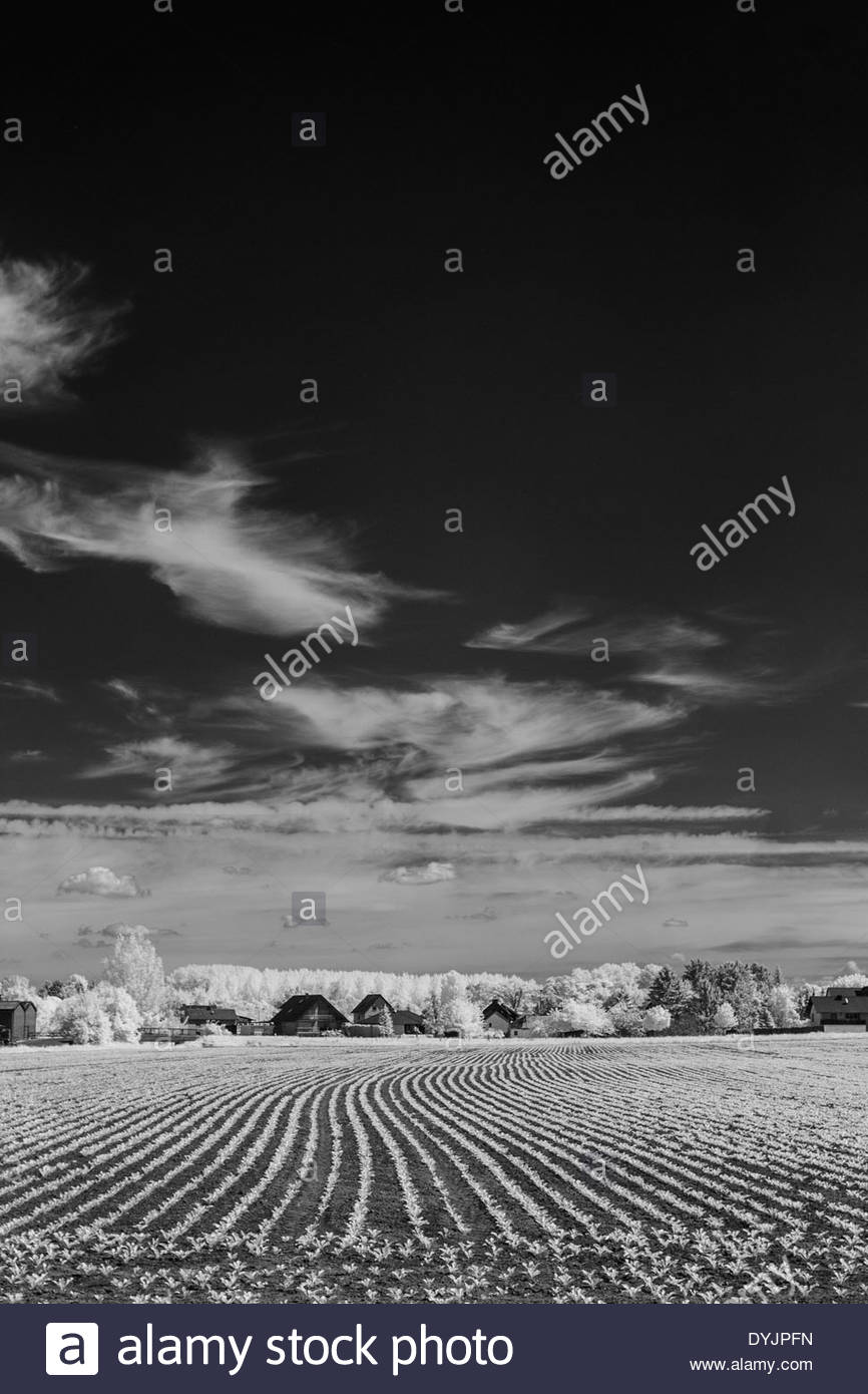 freshly seeded field - Stock Image