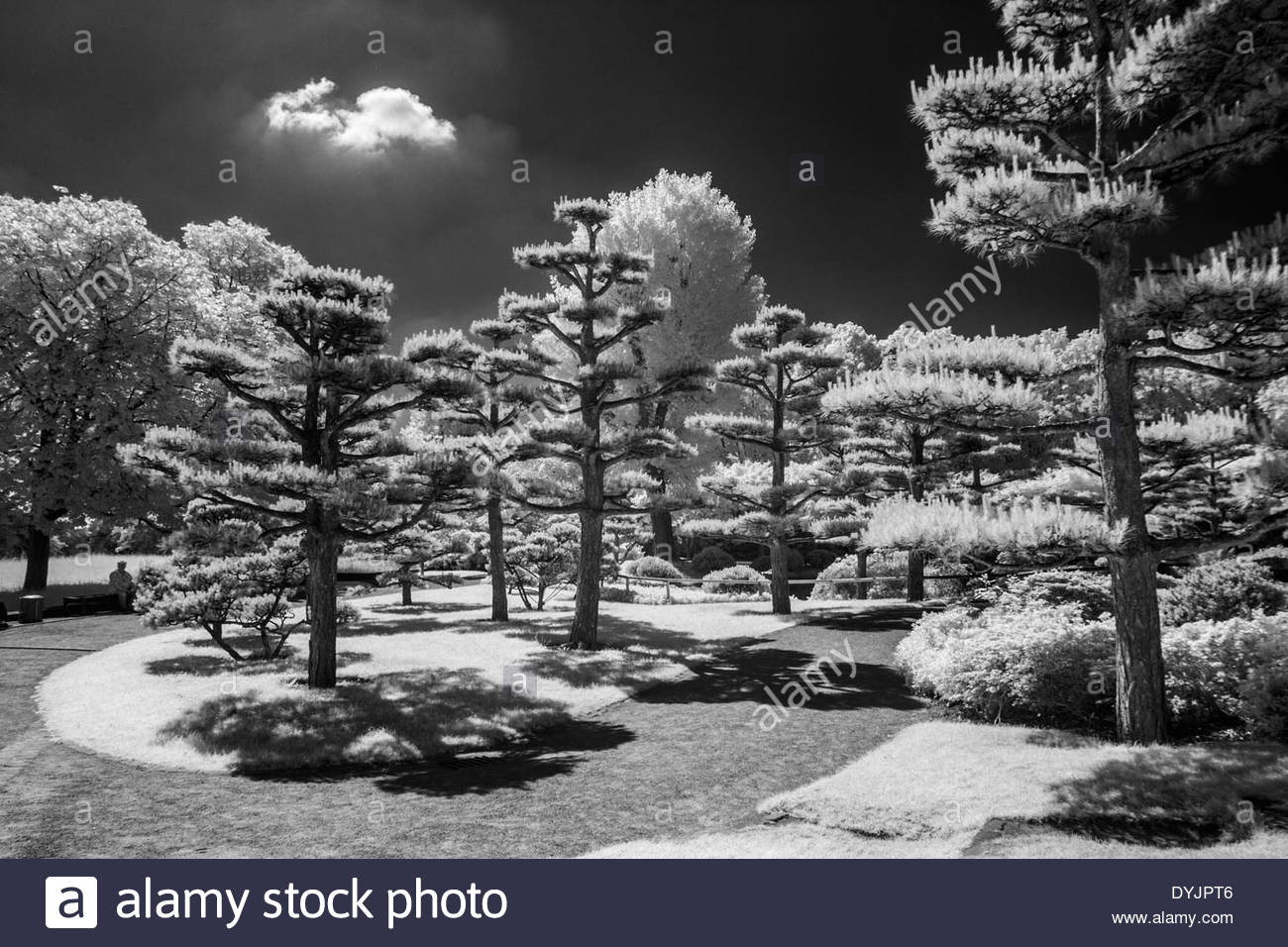 Japanese garden duesseldorf germany stock image