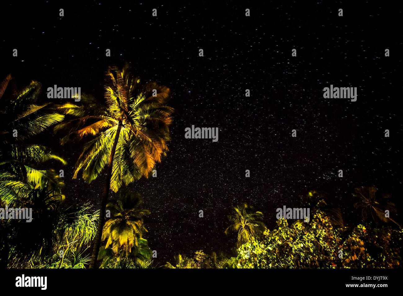 fresh green palm leaves border on black starry night background wonderful beauty of exotic nature tropical vacation concept