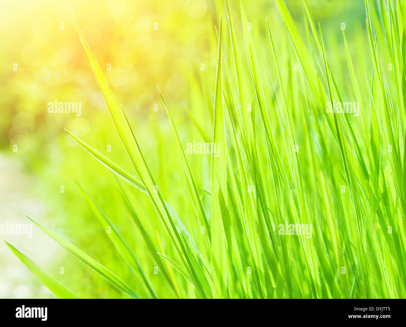 Fresh Green Grass Background Beautiful Grassy Field Abstract Floral Wallpaper Spring Time Nature