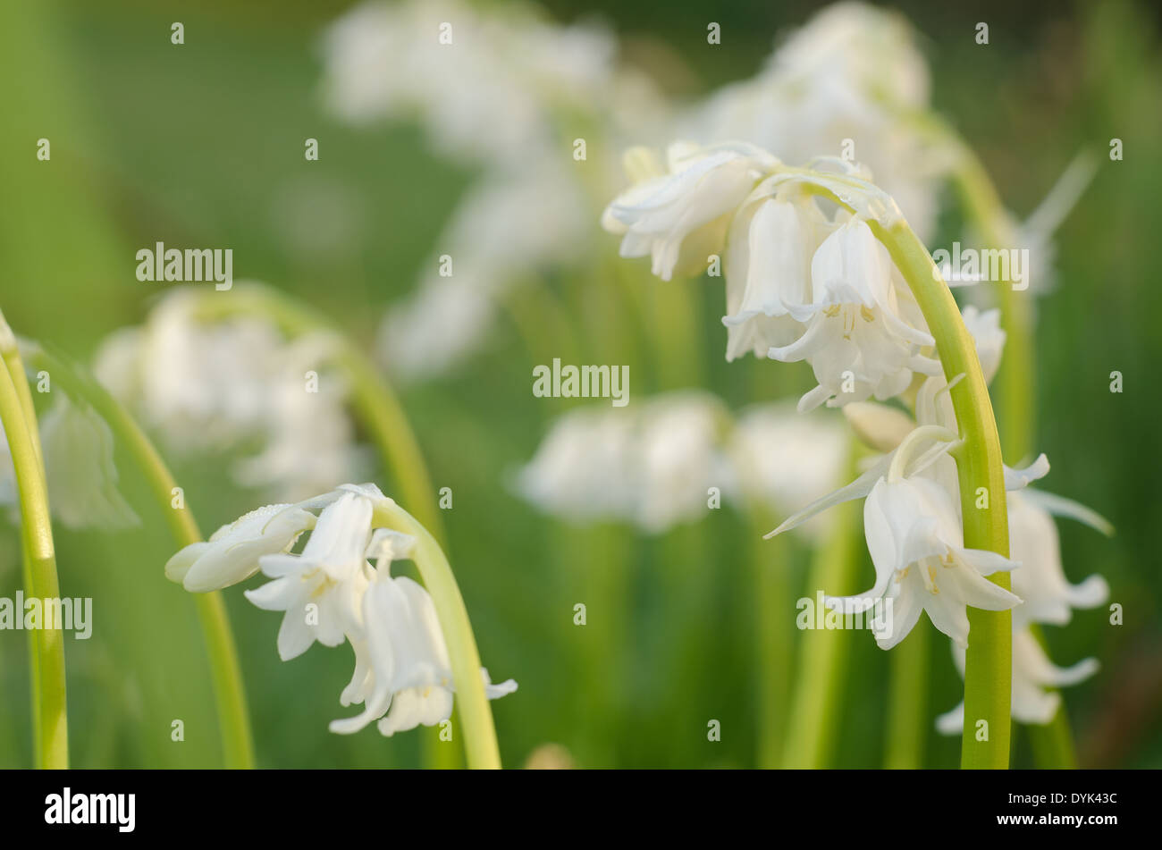 Possibly Spanish Stock Photos & Possibly Spanish Stock Images - Alamy