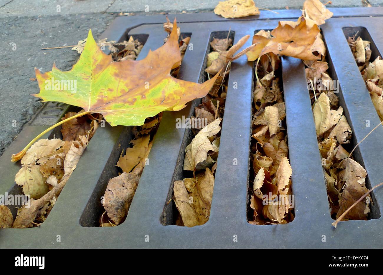 mit Herbstlaub verstopfter Kanaldeckel, blocked gully, mit Herbstlaub verstopfter Kanaldeckel | blocked gully | - Stock Image