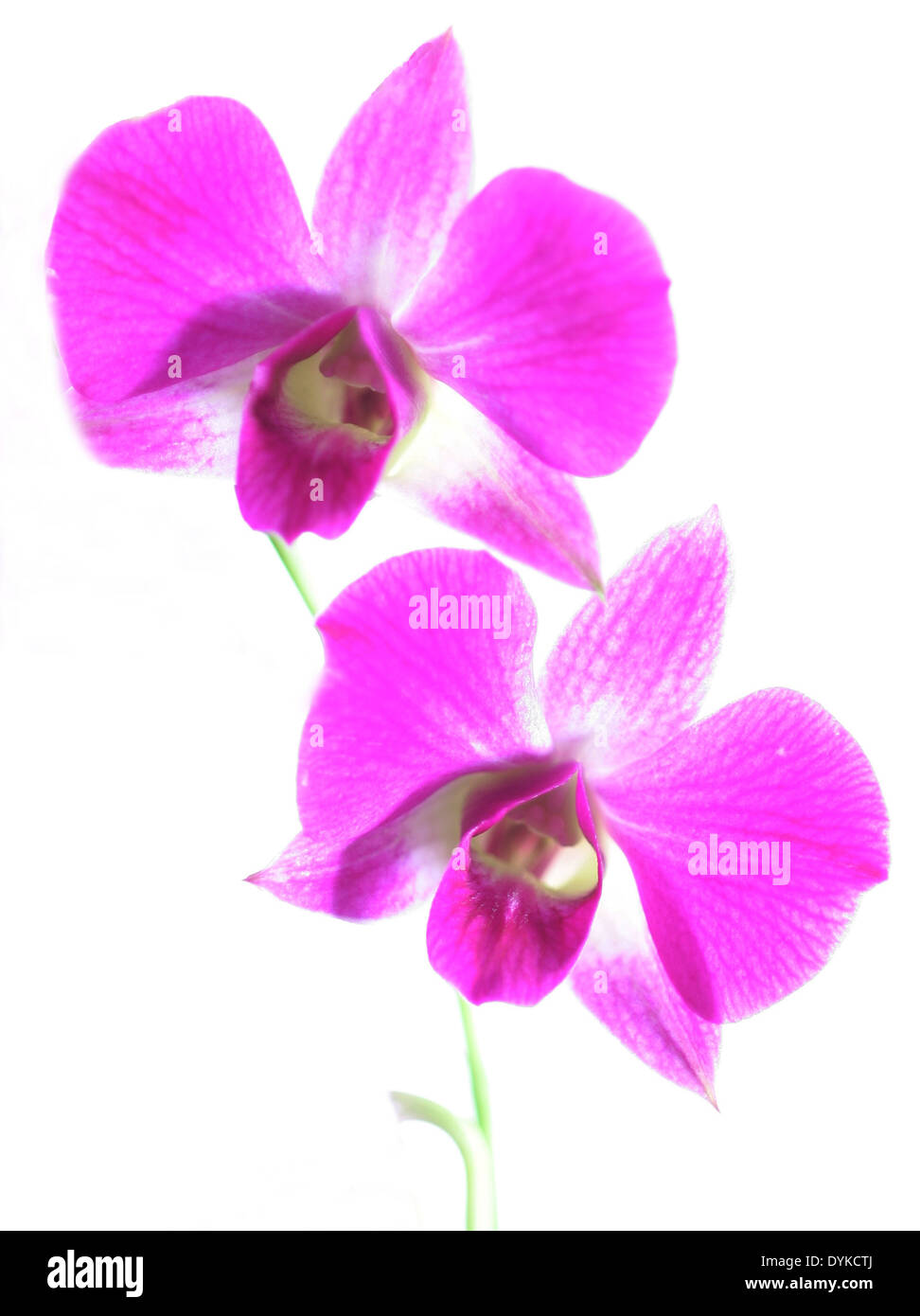 tropical orchid, tropic, exotic, blossoms Stock Photo