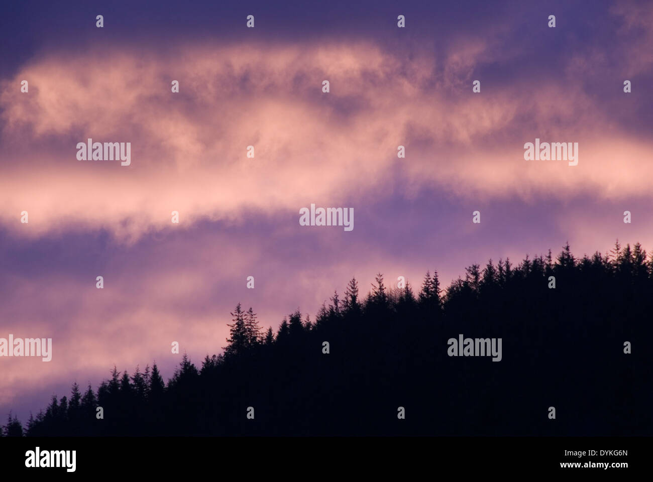 Dawn cloud skyscape behind silhouette of a fir tree forested hill, Snowdonia, Wales, UK - Stock Image