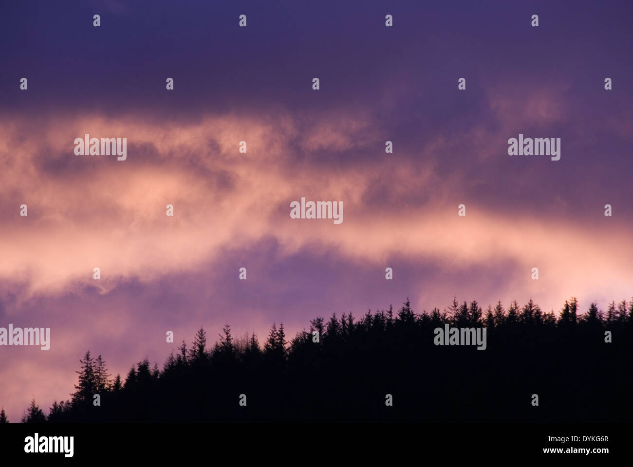 Dawn cloud skyscape behind silhoette of a fir tree forested hill, Snowdonia, Wales, UK - Stock Image