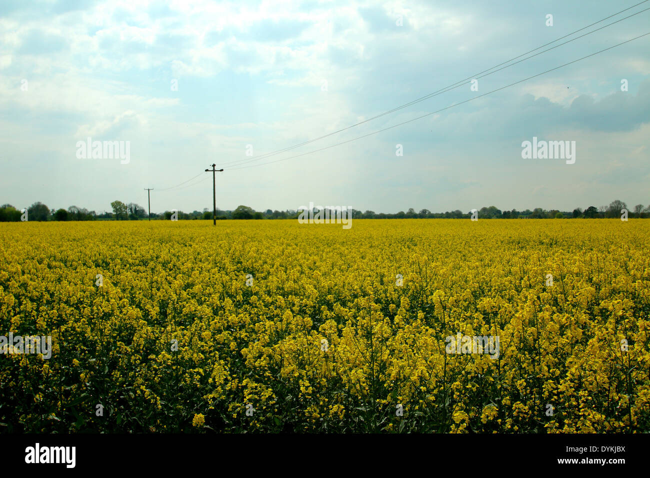 English Field Stock Photo