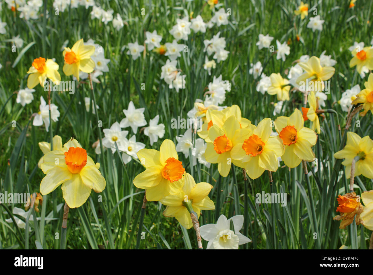 Spring Flowers In Pembroke Lodge Richmond Park Surrey Uk Stock Photo