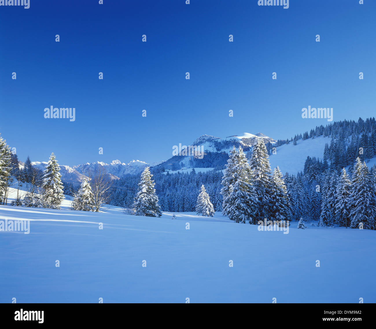 Sudelfeld skiing area with Mt Brünnstein, Kaiser Mountains, near Bayrischzell at the back, Mangfall Mountains, Upper Bavaria - Stock Image