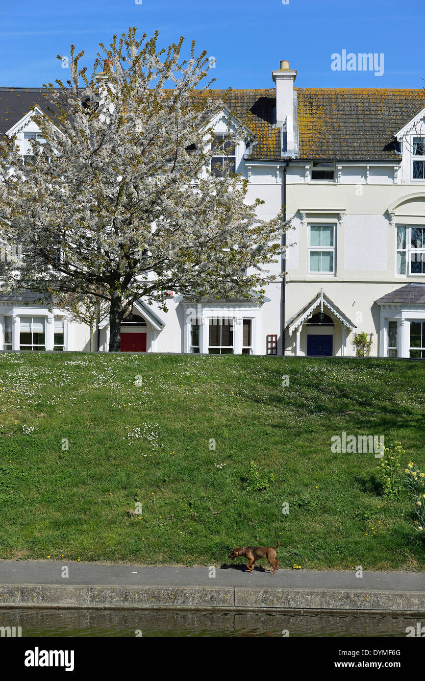 Houses fronting the Royal Military canal at Hythe, Kent. - Stock Image