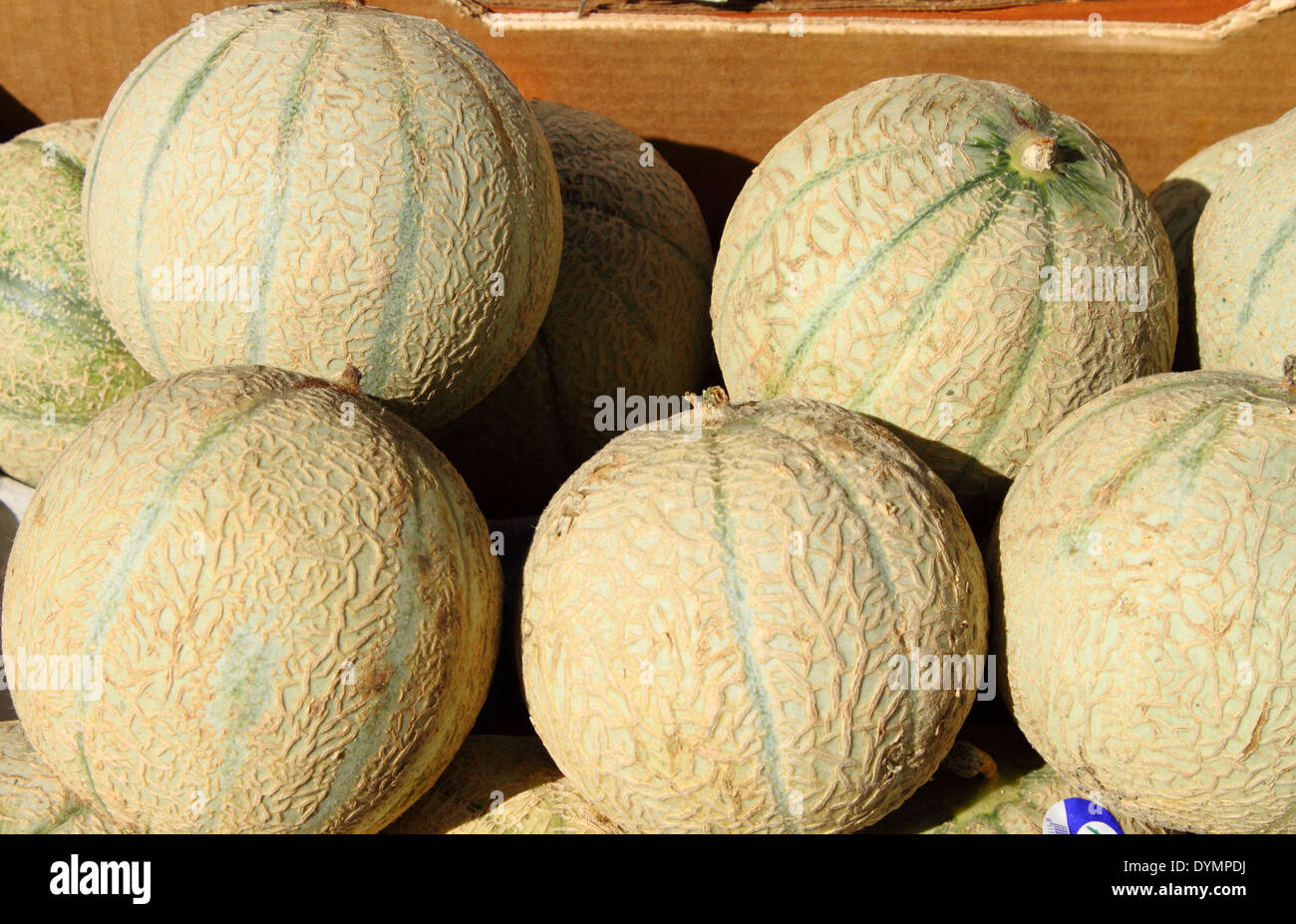 Fresh melons displayed in a greengrocery - Stock Image