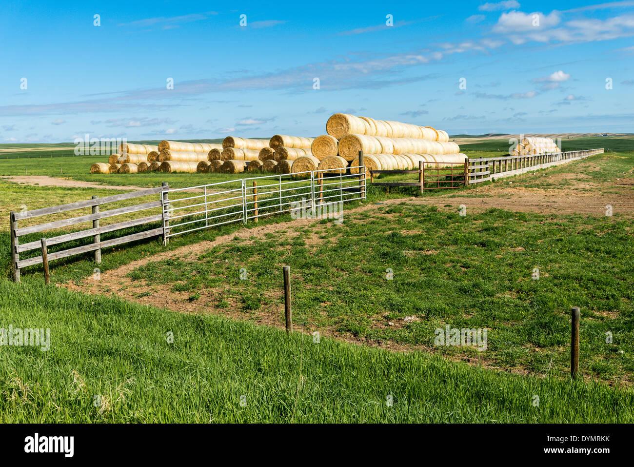 Hay bale piles. Alberta, Canada - Stock Image