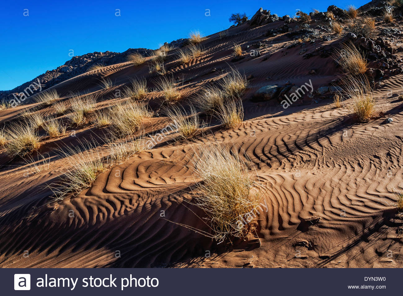 Tufts of grass grow on the dune slopes that formed on mountains in the Bushman Paradise area of the Namib desert - Stock Image