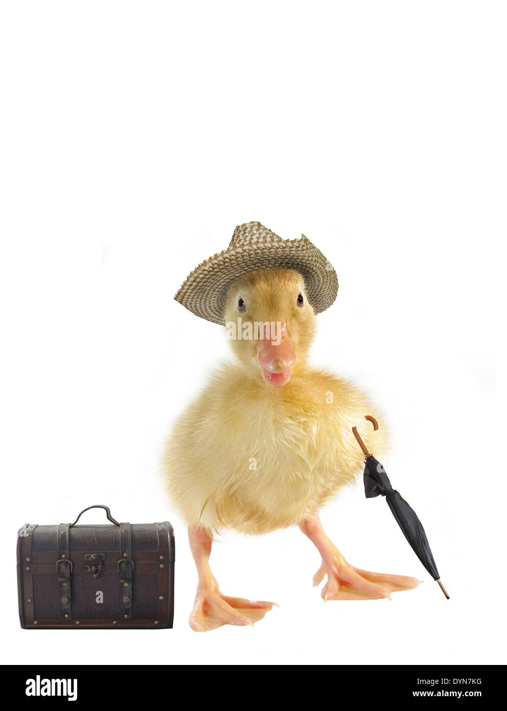 Small Duck In Straw Hat On White Background