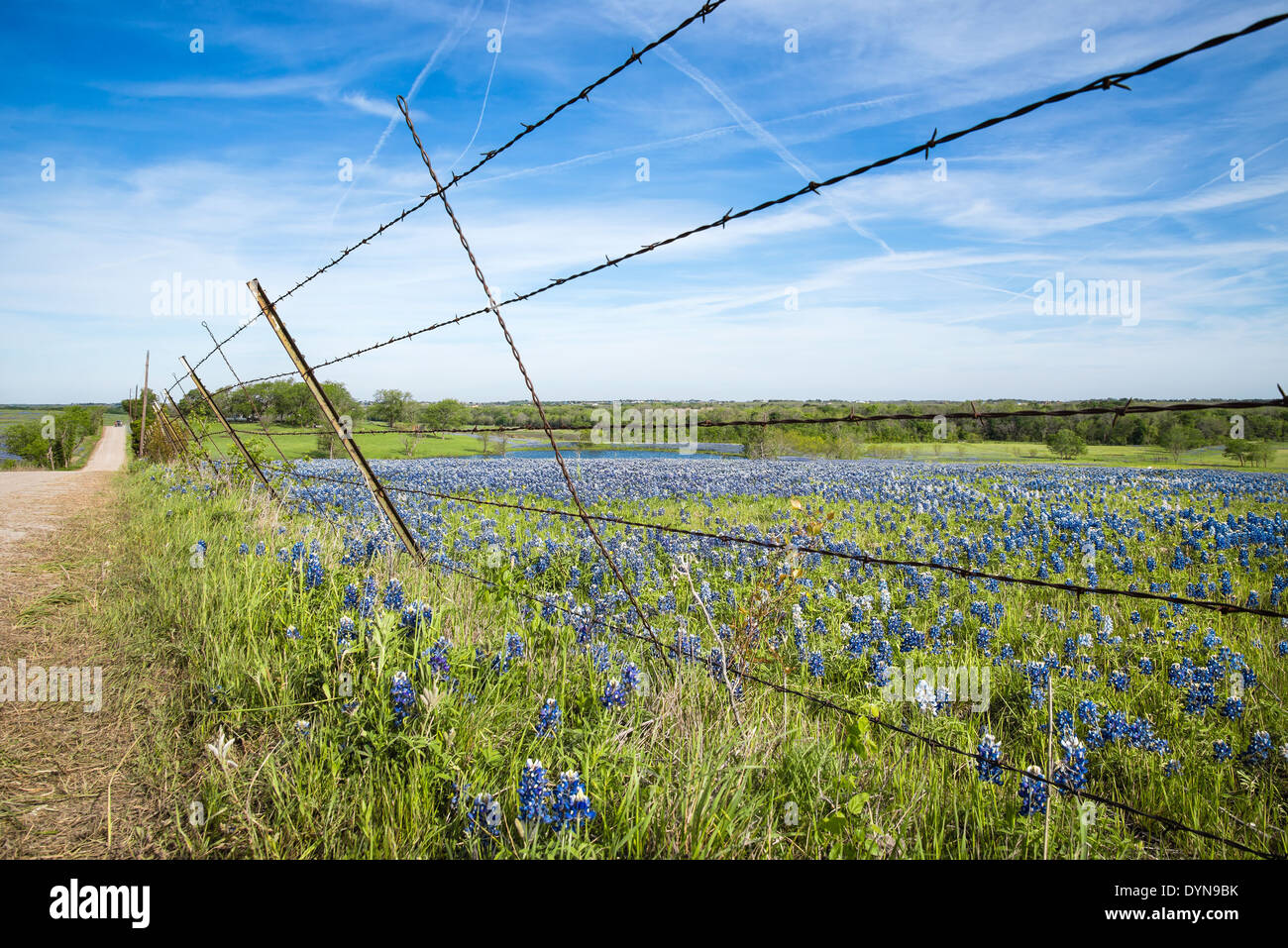 Bluebonnet field and fence along a country road in Texas spring - Stock Image