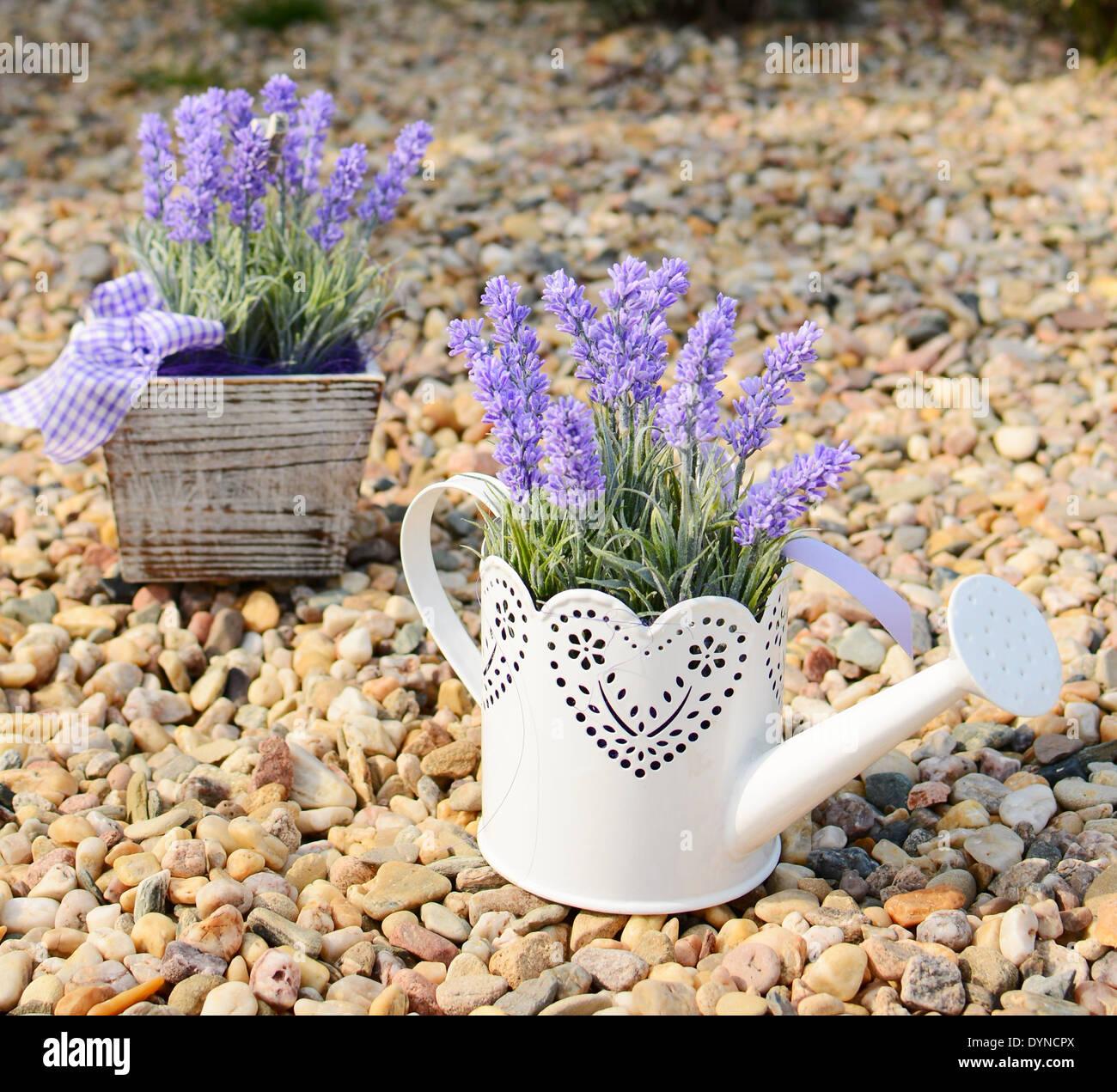Pot Lavender Stock Photos Amp Pot Lavender Stock Images Alamy