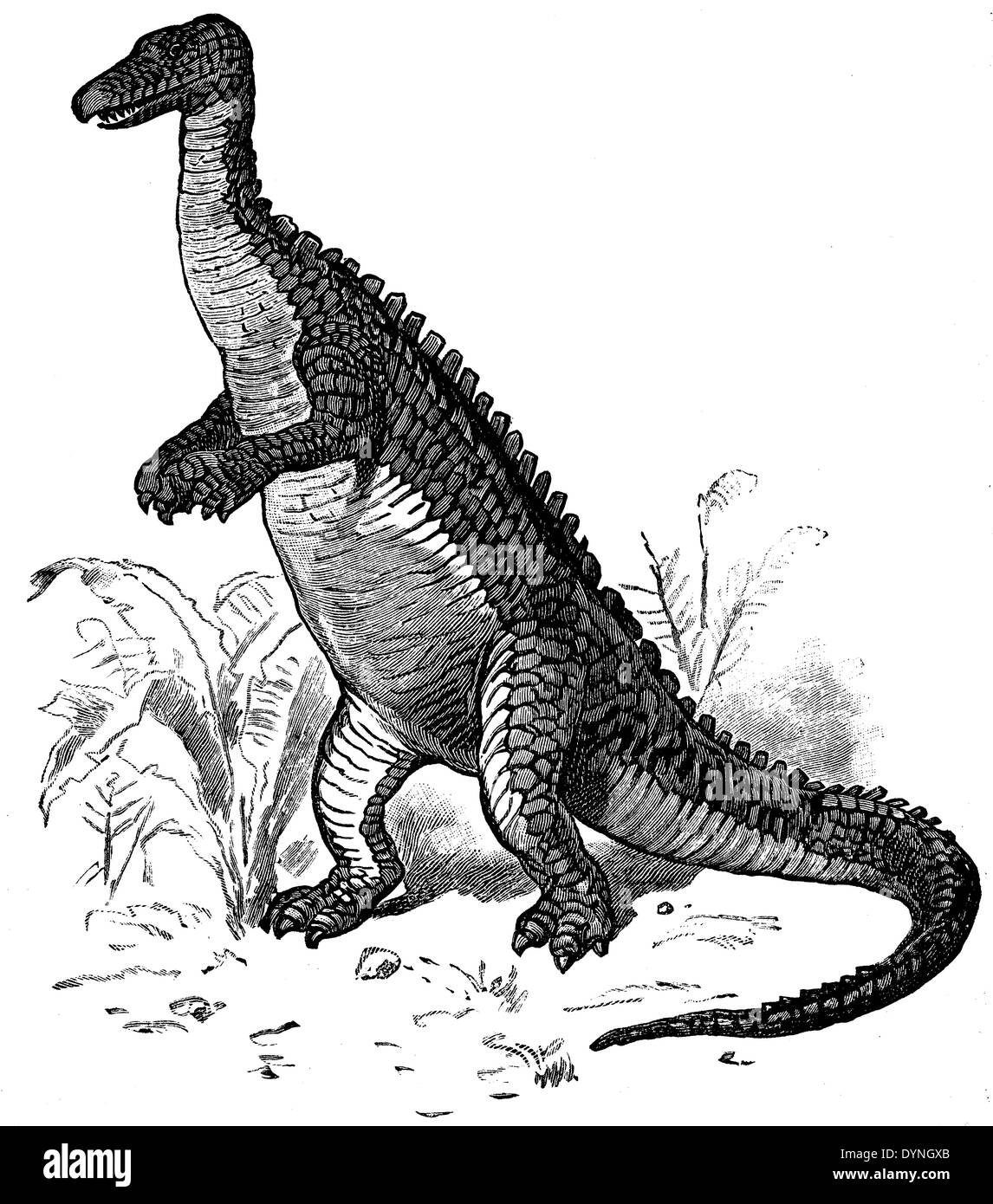 iguanodon stock photos iguanodon stock images page 3 alamy. Black Bedroom Furniture Sets. Home Design Ideas