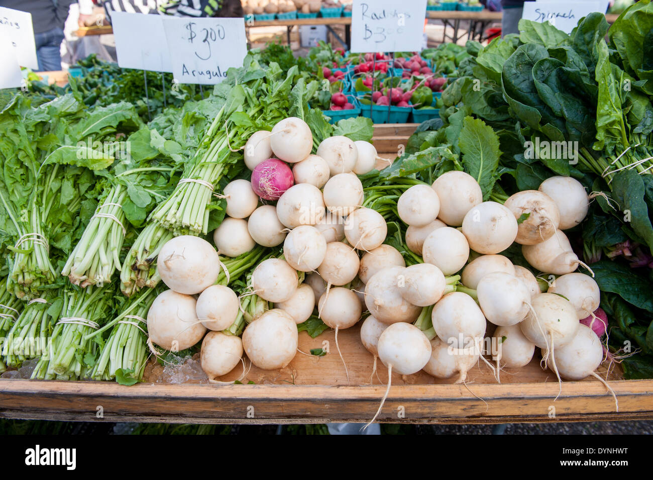 Large white root vegetables at the Waverly Farmers Market in Baltimore, Maryland - Stock Image