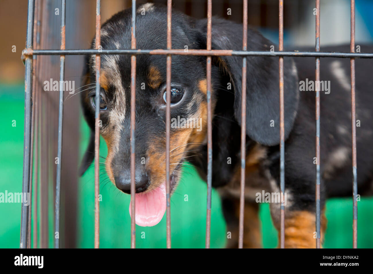 Kennels for dogs in Ivano-Frankivsk region: a selection of sites