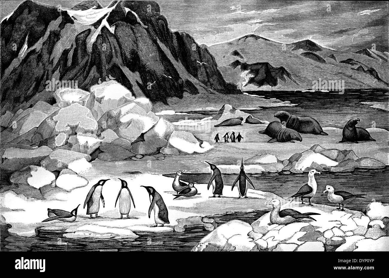 Typical animals of Antarctic area, illustration from Soviet encyclopedia, 1926 - Stock Image