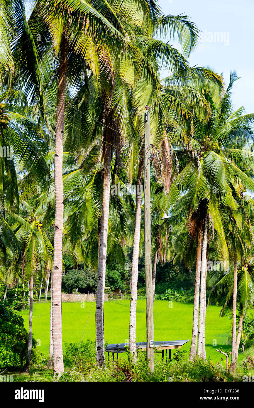 Rural Landscape in Puerto Princesa, Palawan, Philippines Stock Photo