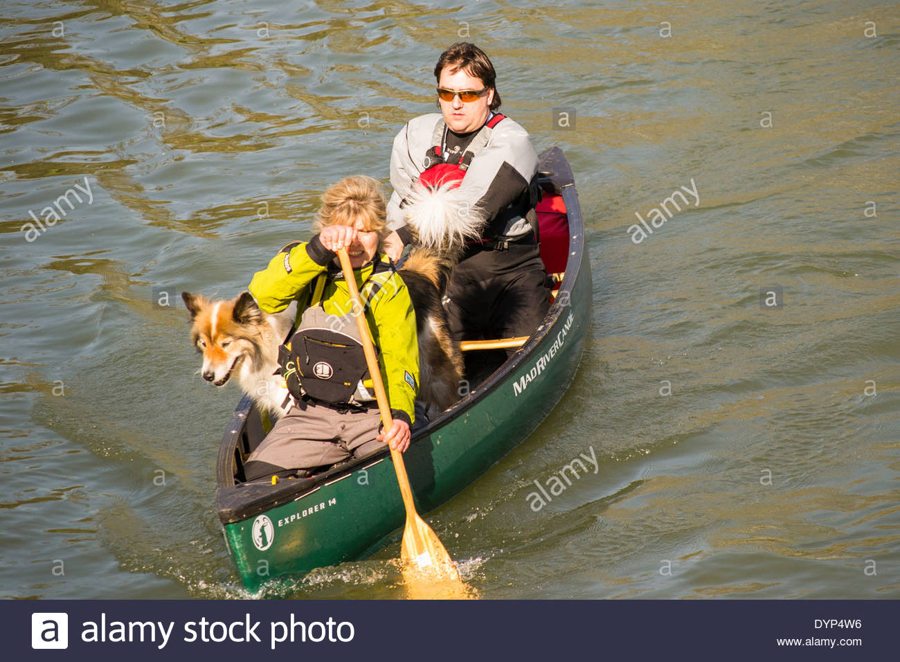 Canoeists on the River Cam in Cambridge, carrying a large dog as a passenger - Stock Image