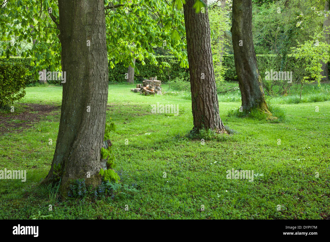 Horse chestnut trees forming part of the Western Approaches avenue at Whipsnade Tree Cathedral, Chilterns, Bedfordshire, England - Stock Image