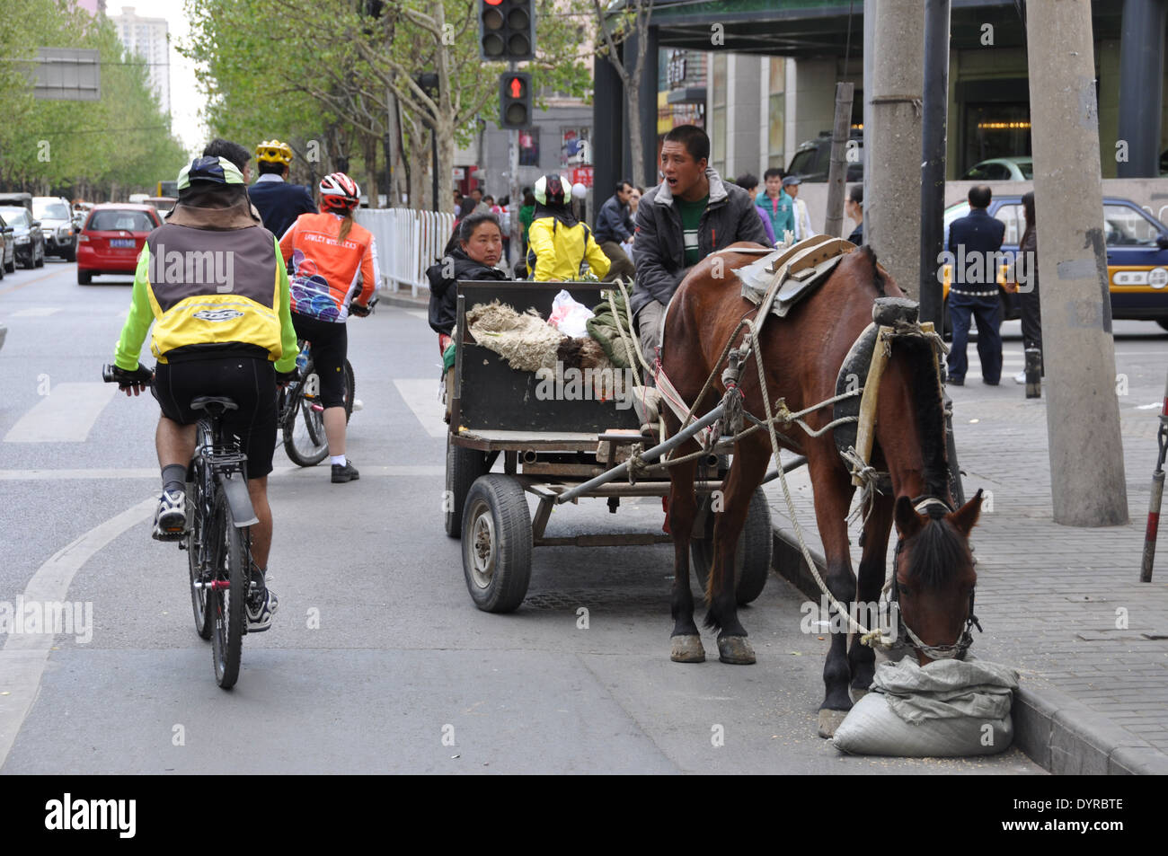 Australian cyclists on a cycling tour of China riding past a horse and cart in Beijing - Stock Image