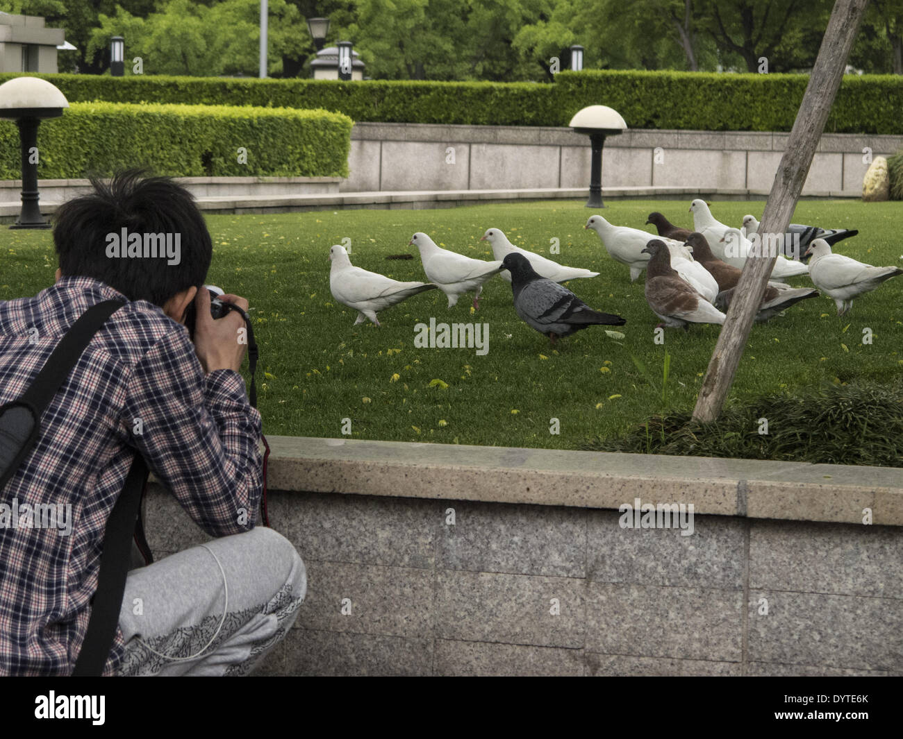 A man take pictures of a flock of pigeon at a park - Stock Image