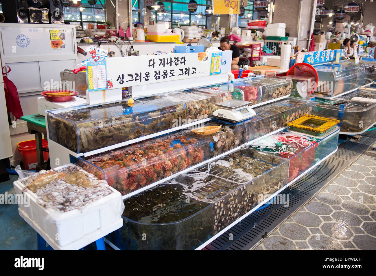 Booth inside the big fish market in Yeosu, South Korea with living invertebrate animals such as snails octopus mussles algae and - Stock Image