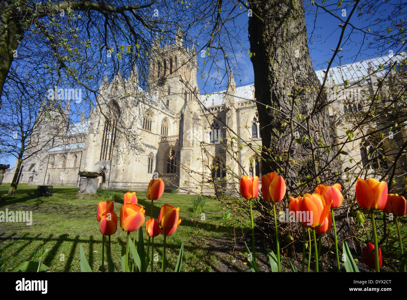 selby abbey at springtime founded in 1069 by benedict of Auxerre north yorkshire united kingdom - Stock Image