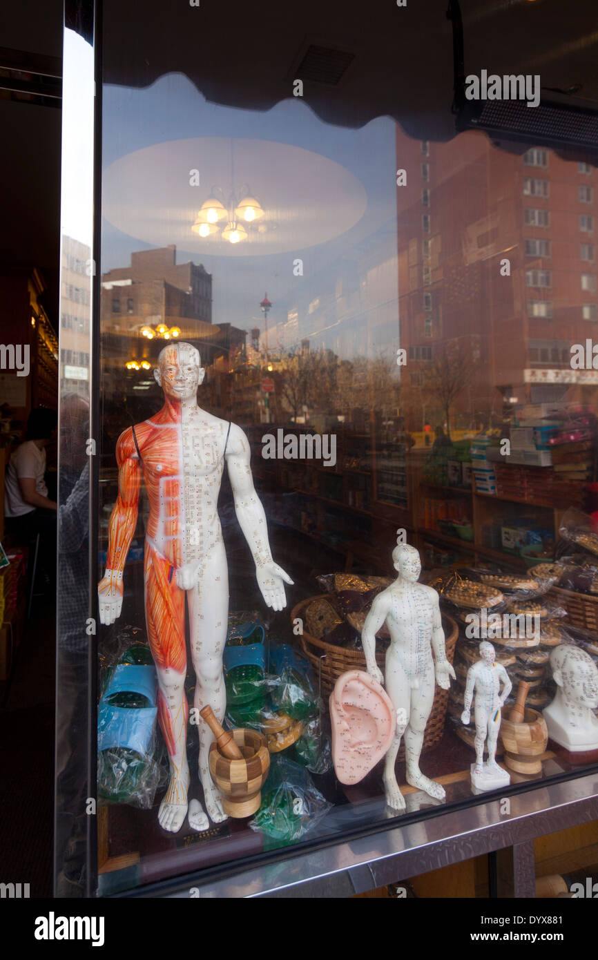 acupuncture models, Chinatown, Manhattan, New York City, New York - Stock Image