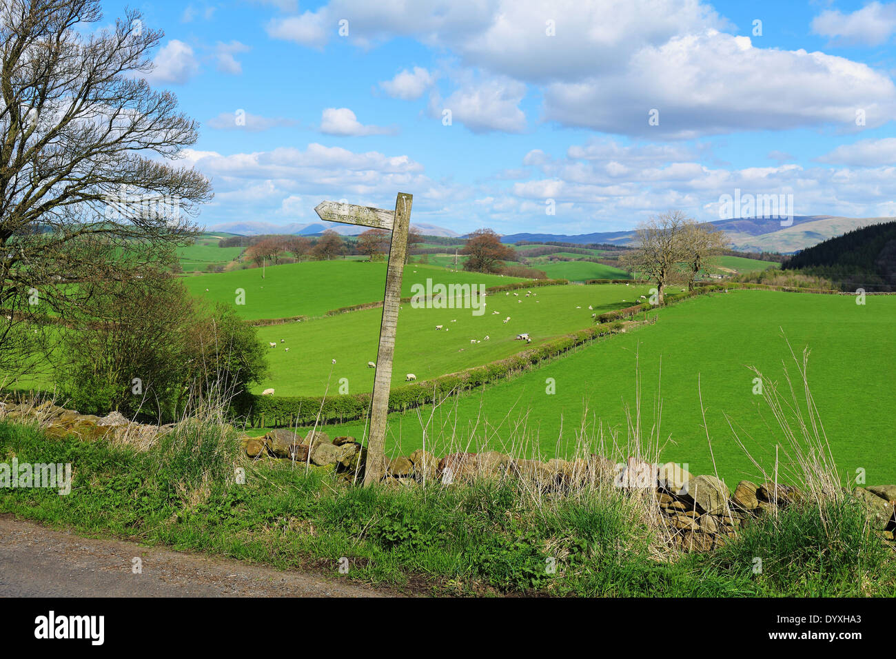 A Rural Landscape in Cumbria with signpost and grazing sheep in the distance - Stock Image