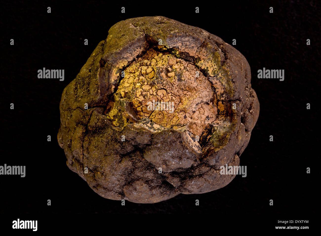 Polymetalic deep sea nodule, cross-section, Manganese and cobalt rich, From 800 meters depth form Blake plateau Atlantic ocean - Stock Image
