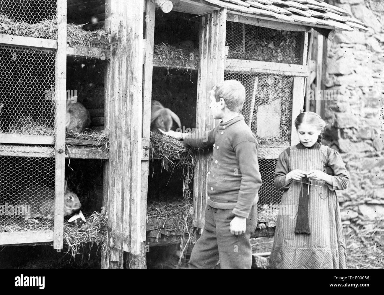 Rabbit breeding during the war, 1917 - Stock Image