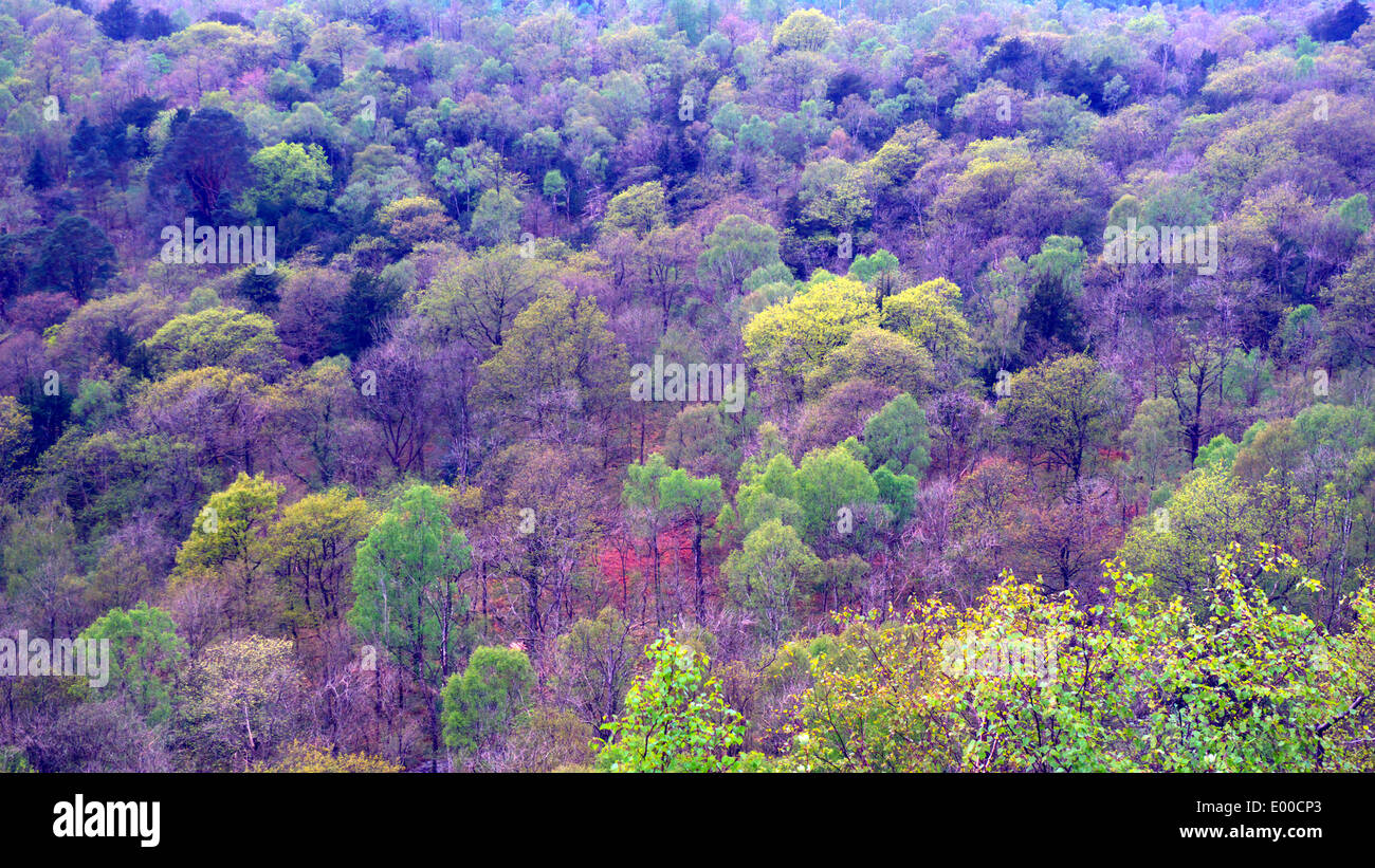 Looking down over mixed woodland of Park Wood from Whitbarrow, Cumbria, UK - Stock Image