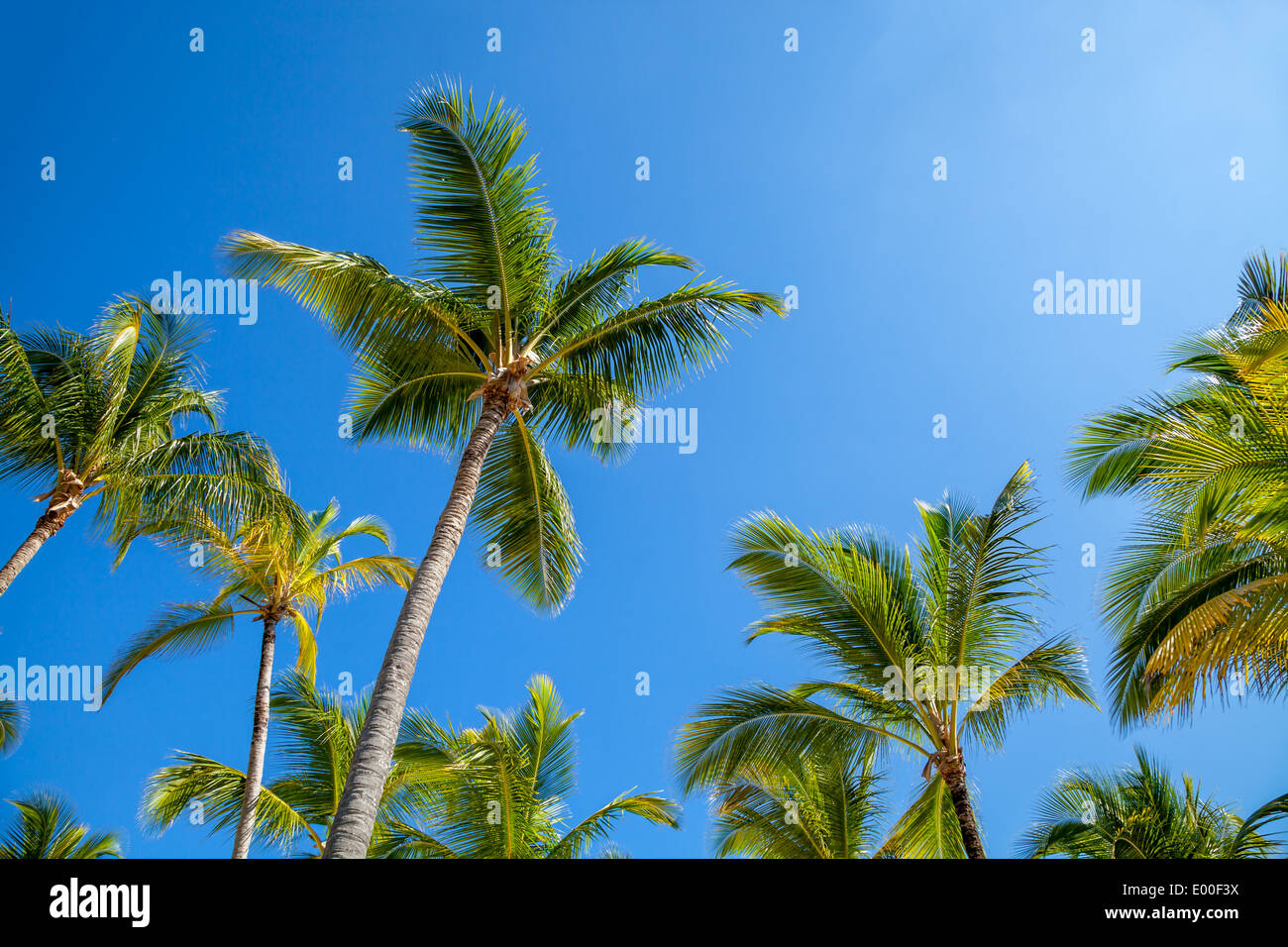 Palm trees against blue sky at sunset - Stock Image