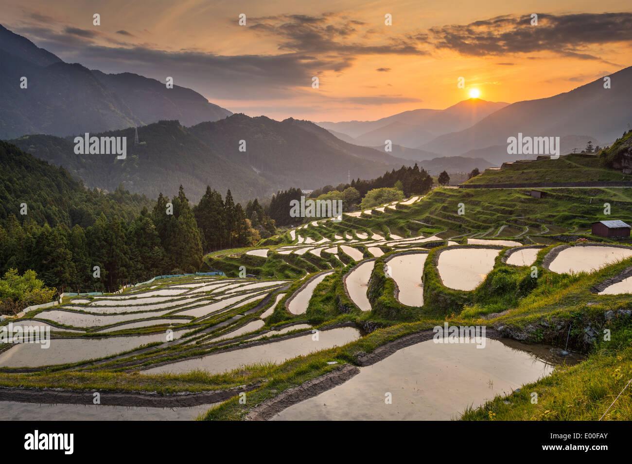 Japanese rice terraces at sunset. Maruyama-senmaida, Kumano, Japan. - Stock Image