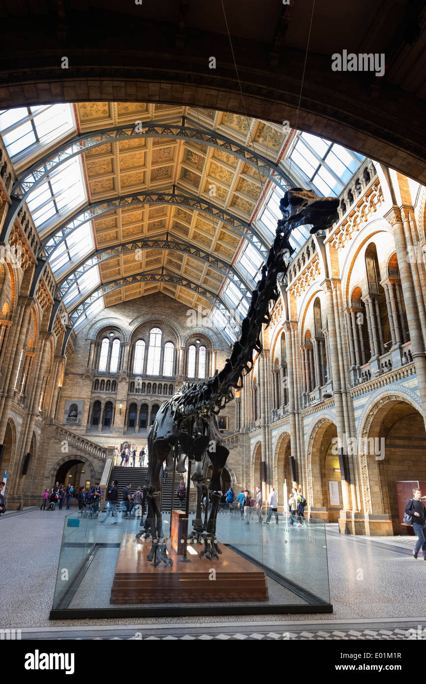 Dinosaur on display at  the Natural History Museum in London United Kingdom - Stock Image