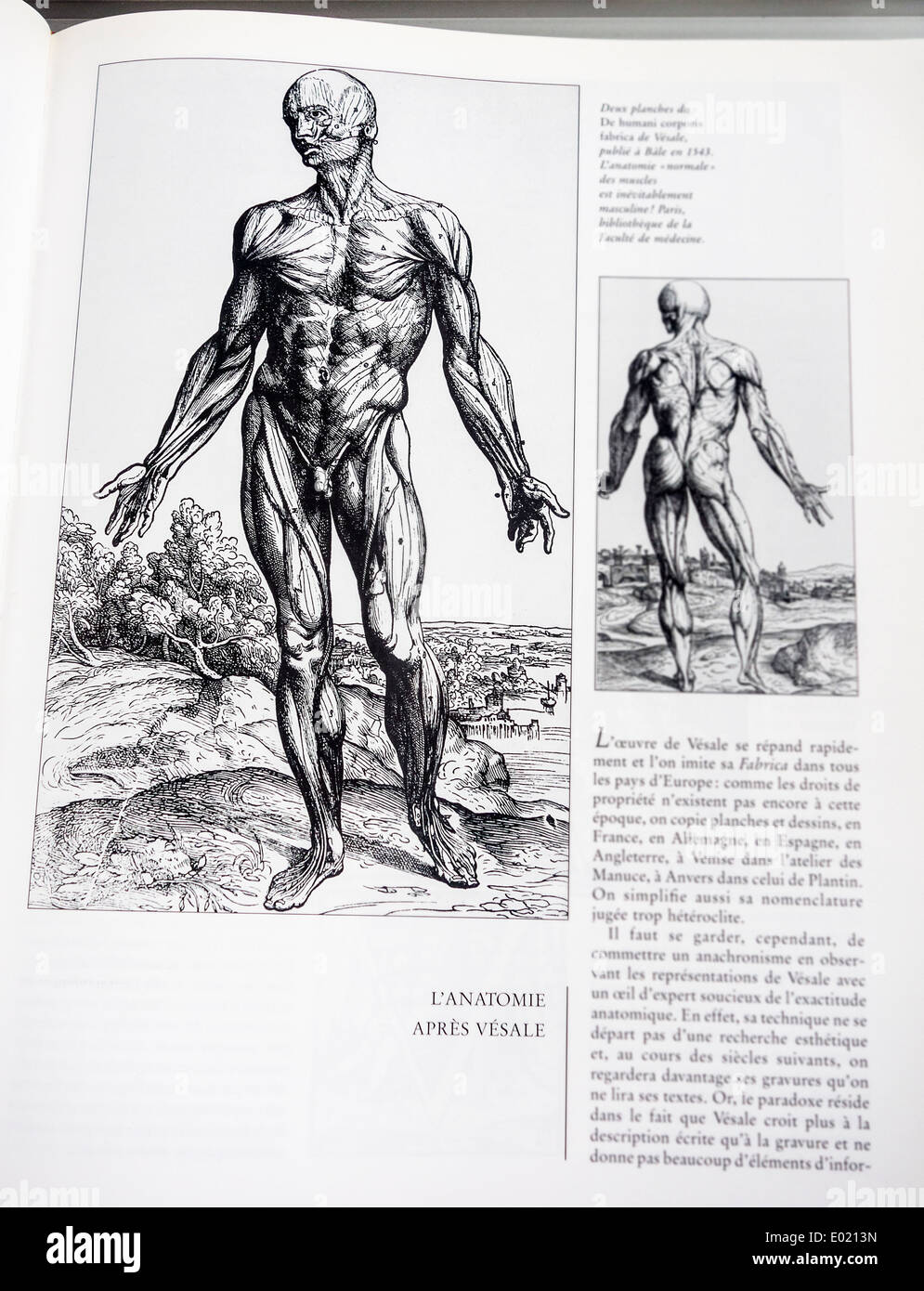 Book with detailed illustrations on human anatomy, De humani corporis fabrica by Belgian anatomist Andreas Vesalius - Stock Image