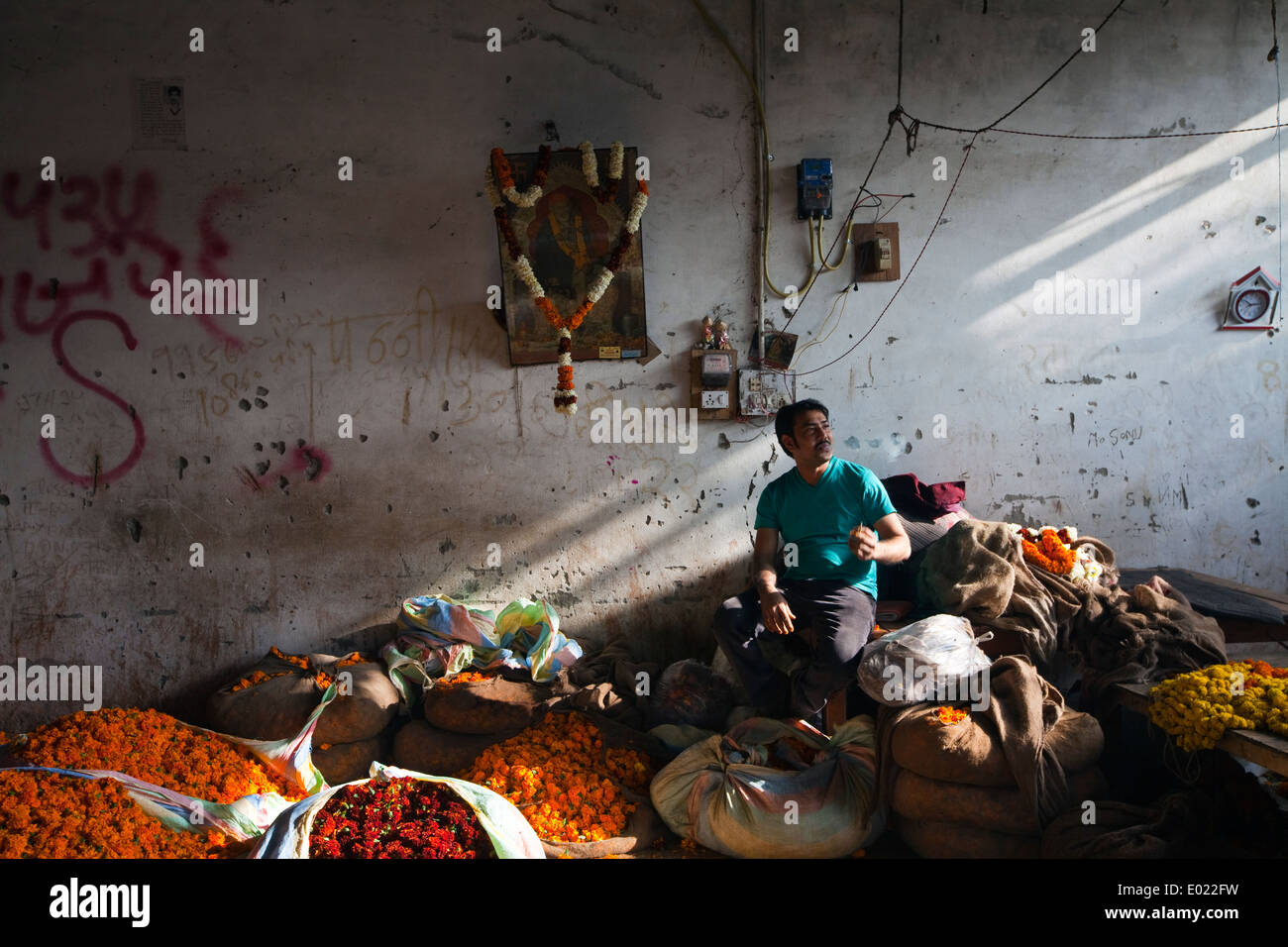 A man smokes a cigarette at his stall amidst A marigolds for garlands at the Mehrauli flower market, Delhi, India - Stock Image