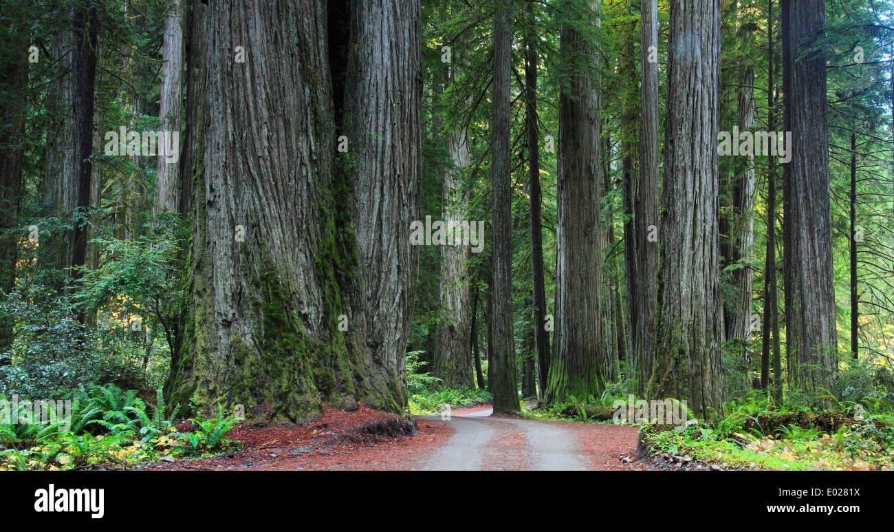 Photo of Jedediah Smith Redwoods State Park, California - Stock Image