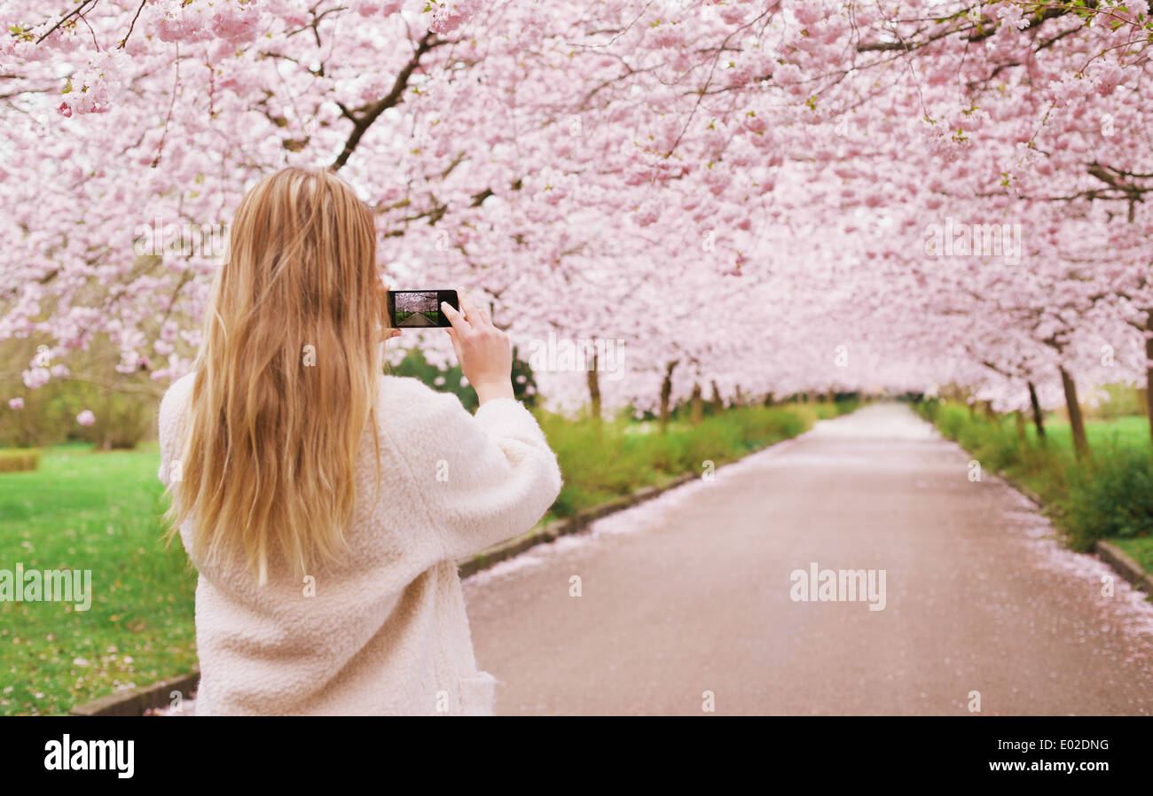 Rear view of a young woman using her mobile phone to capture images of the path and cherry blossoms tree at park. - Stock Image