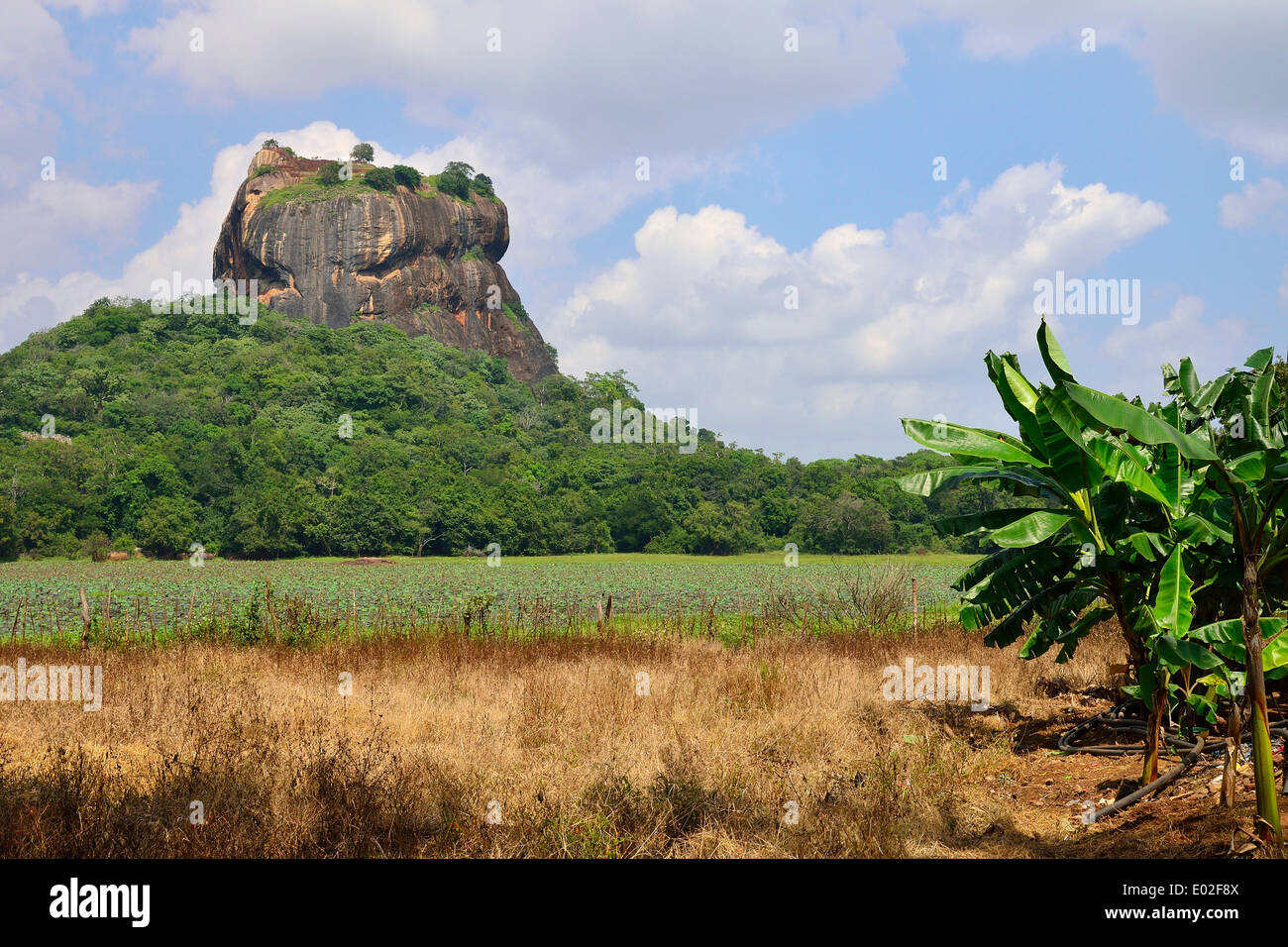 The Lion Rock, the magma block of an eroded volcano, with the ruins of a fortress, UNESCO World Heritage Site, Sigiriya - Stock Image