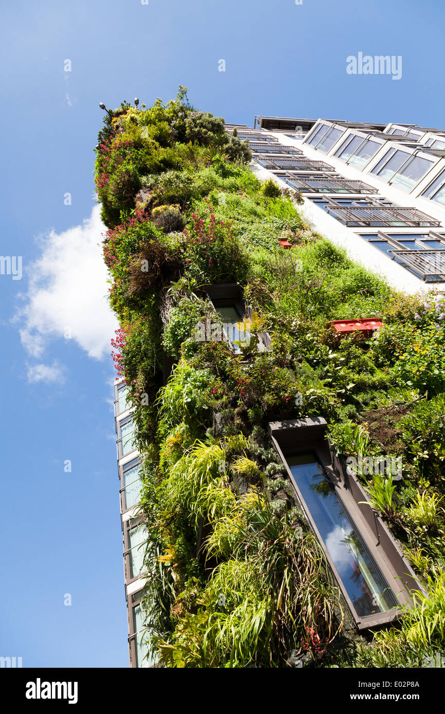 The living wall on the Athenaeum Hotel Piccadilly, London. - Stock Image