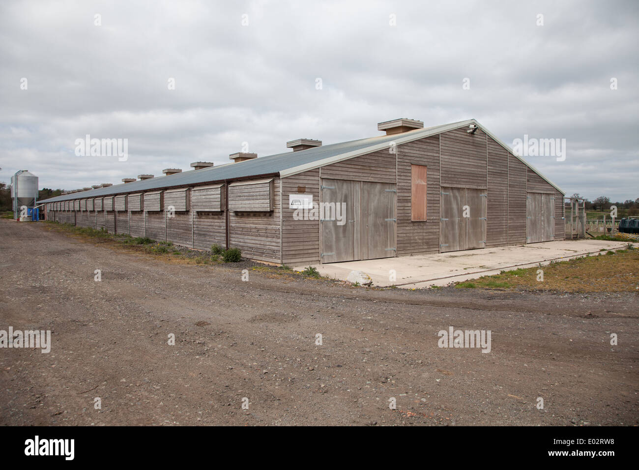 An industrial chicken rearing shed of a commercial breeder - Stock Image